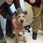 Touching – Formerly Blind Dog Sees Owner
