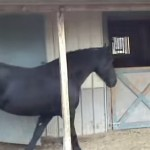 You Won't Believe What This Horse Does Until You See It thumbnail