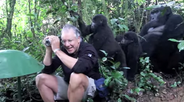 Amazing Enounter with Wild Family of Gorillas – Unbelievable